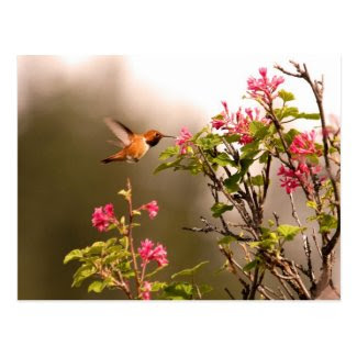 Hummingbird and Flowers Postcard