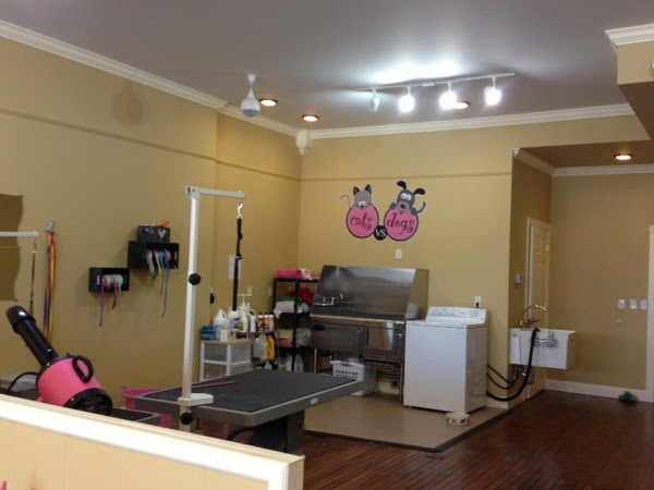 Pets Get Top Dog Treatment At New Cat And Dog Grooming Salon In