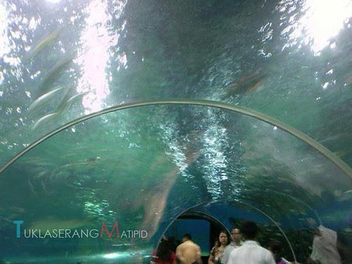 manila ocean park, manila, philippines