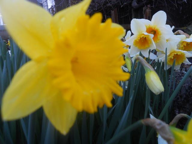 spring2011 033