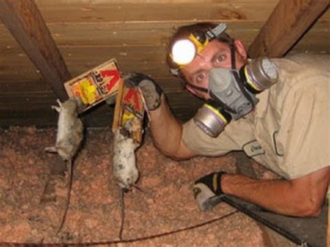 how to get rid of rats   how to kill rats   how to catch a rat   how to kill a rat   YouTube