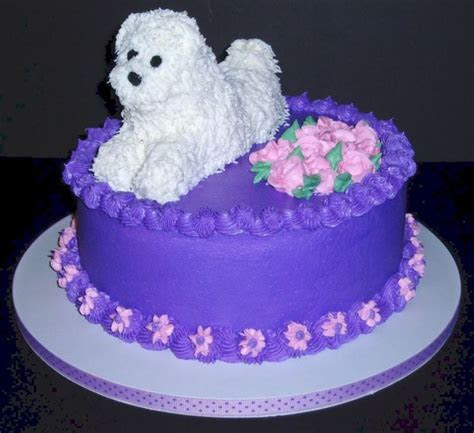 dog birthday cake give  dog  special treat