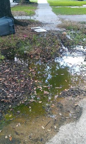 Carrollton Sidewalk Swamp