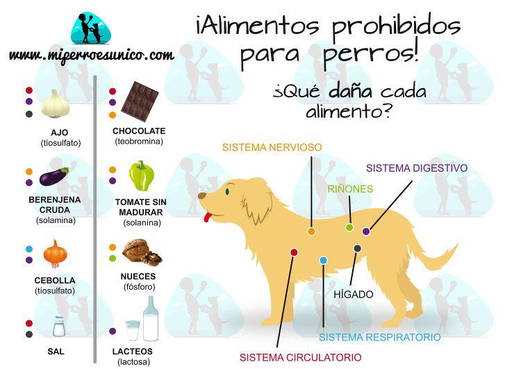 Infografía de alimentos prohibidos para perros - Mi Perro ...