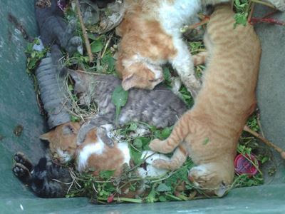 δηλητηριάστηκαν 16 γάτες στην Κω