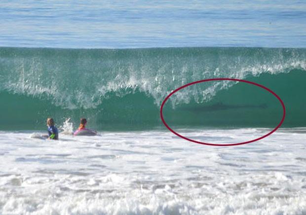 June Emerson flagrou o que parece ser um tubarão em uma onda em Manhattan Beach (Foto: Reprodução/Facebook/KTLA)