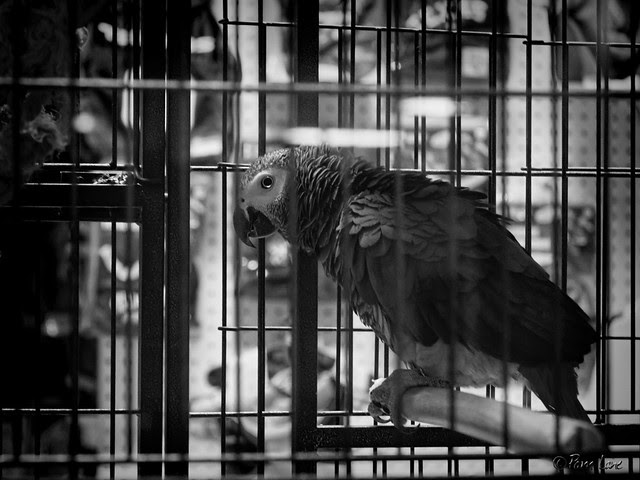 Pets and Grooming parrot