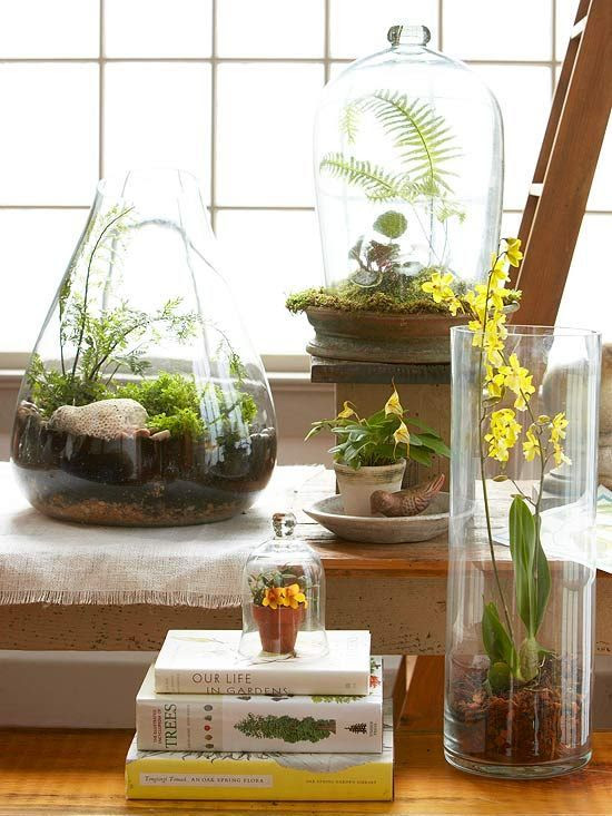 "Terrariums came of age with the Victorians and are enjoying a newfound resurgence, fueled in part by their affordability and the continued interest in all things gardening. ""It's something everybody can do,"" says Tovah Martin, author of The New Terrarium and a lecturer who gives workshops on the subject across the country. ""You can do it on a budget, do it with kids, do it with seniors."""