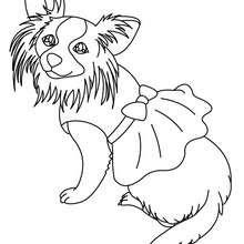 Dibujos Para Colorear Perro Pekines Eshellokidscom