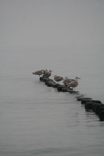 Buhne & Sea Gull