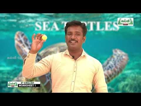 6th English Work book Sea Turtles  Unit 1 Kalvi TV