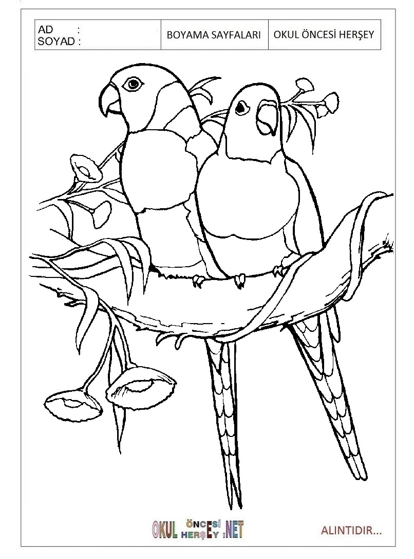 Baby Bird Coloring Pages For Kids Crazywidowinfo
