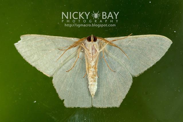 Moth - DSC_0086
