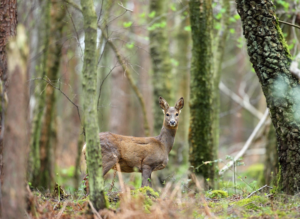 Showdown in St Leonards Forest [2]