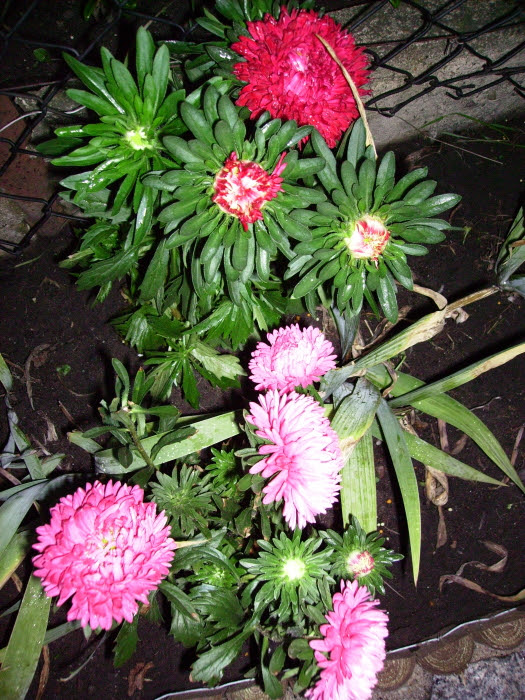 2006-08-16_aster_2