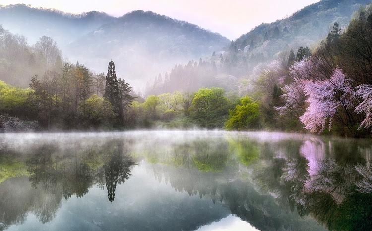 Spring In South Korea By Kim Suk Eun