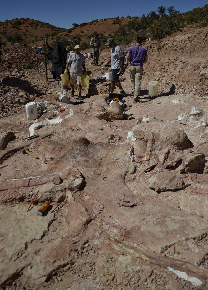 Biggest dinosaur ever unearthed in Argentina