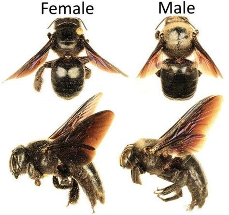 How To Get Rid Of Carpenter Bees Inside and Outside Of Your House   Pest Revenge