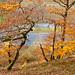 Oaks above the Eder river #I, Lindenberg, Germany