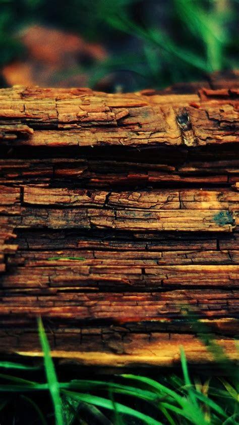 Nature wood macro wallpaper   (34164)