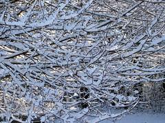 Snow_12609d
