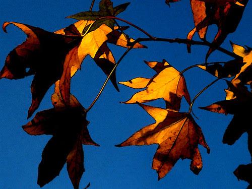 leaves (watercolor)