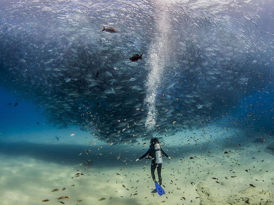 All The Fish In The Sea, Cabo Pulmo