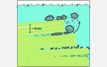 biomoléculas_entre_hojas_de_mica