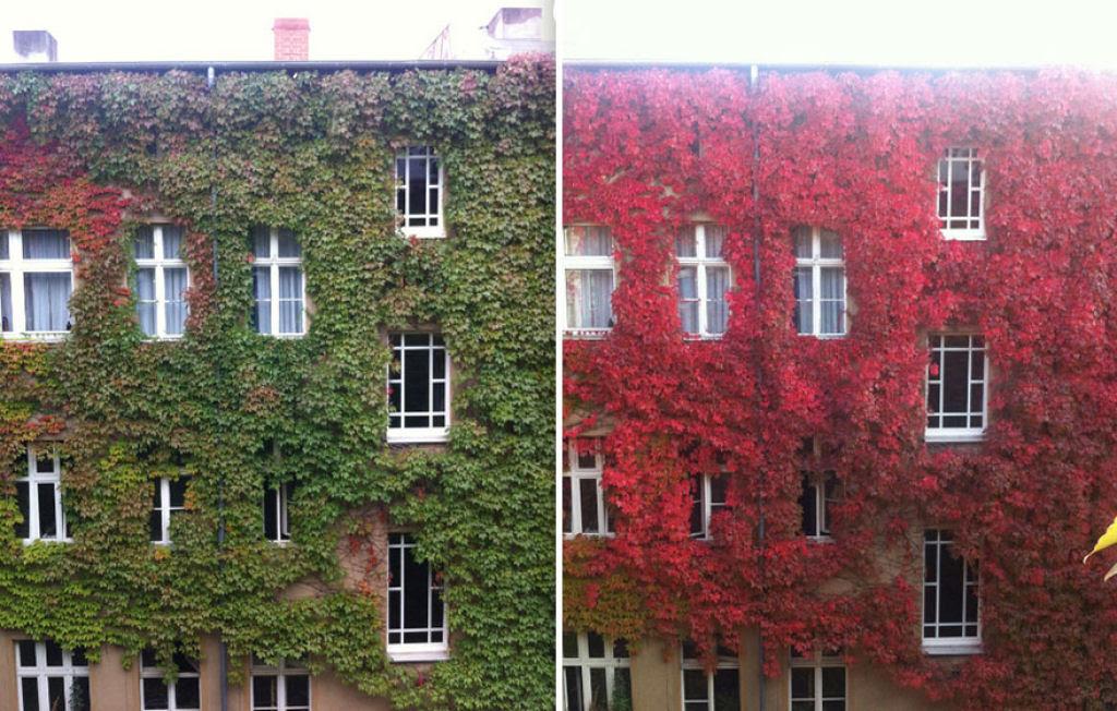 12 antes e depois das mais belas transformações que chegam com o outono 11