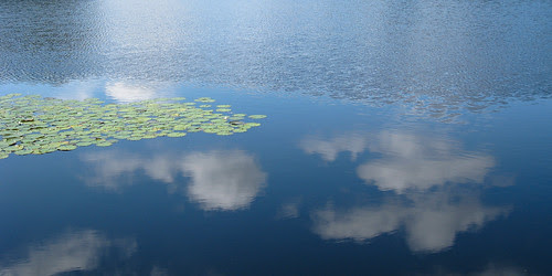 reflecting clouds in lily pads