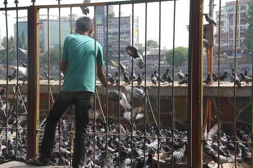 Feeding The Pigeons At  Bandra Talao SV Road by firoze shakir photographerno1