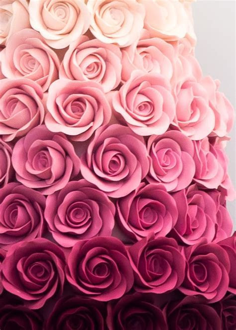 Ombre Rose ? Rosalind Miller Cakes   London, UK