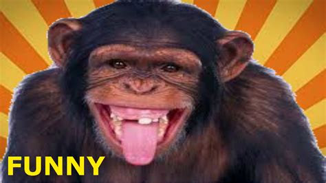 meme lucu monyet keren  terbaru kumpulan gambar