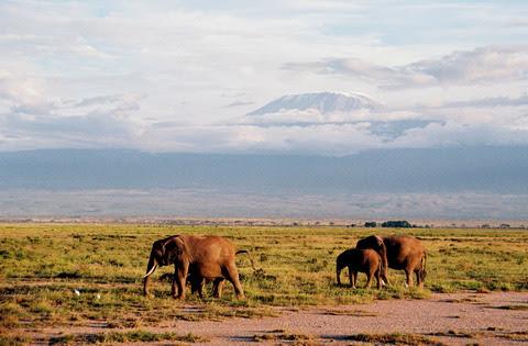 Elefanti la umbra Kilimanjaro