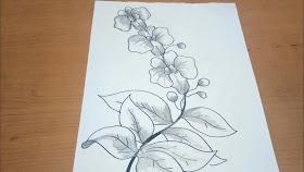 Sketsa Gambar Bunga Anggrek