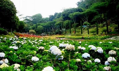 Taman-Bunga-Selecta