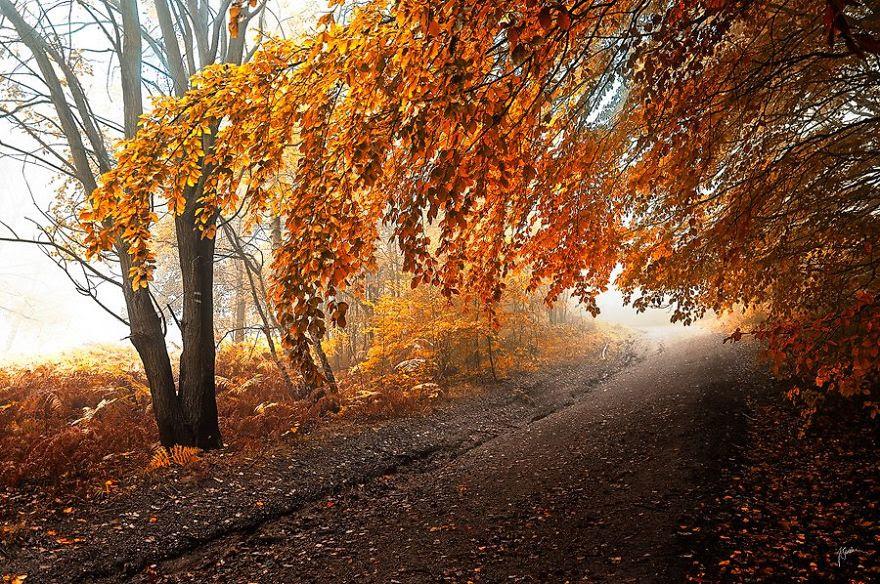 fotografia-bosques-otono-janek-sedlar (17)