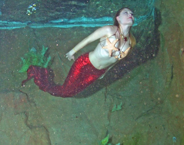 mermaid, ariel mermaid, real mermaid pictures,real mermaid picture, mermaid images, mermaids, are mermaids real, real mermaid image, mermaid photo, mermaid gallery-61