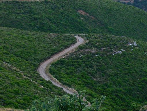 Το «χαμηλό δάσος» των φρυγάνων (από το αρχείο του συγγραφέα)