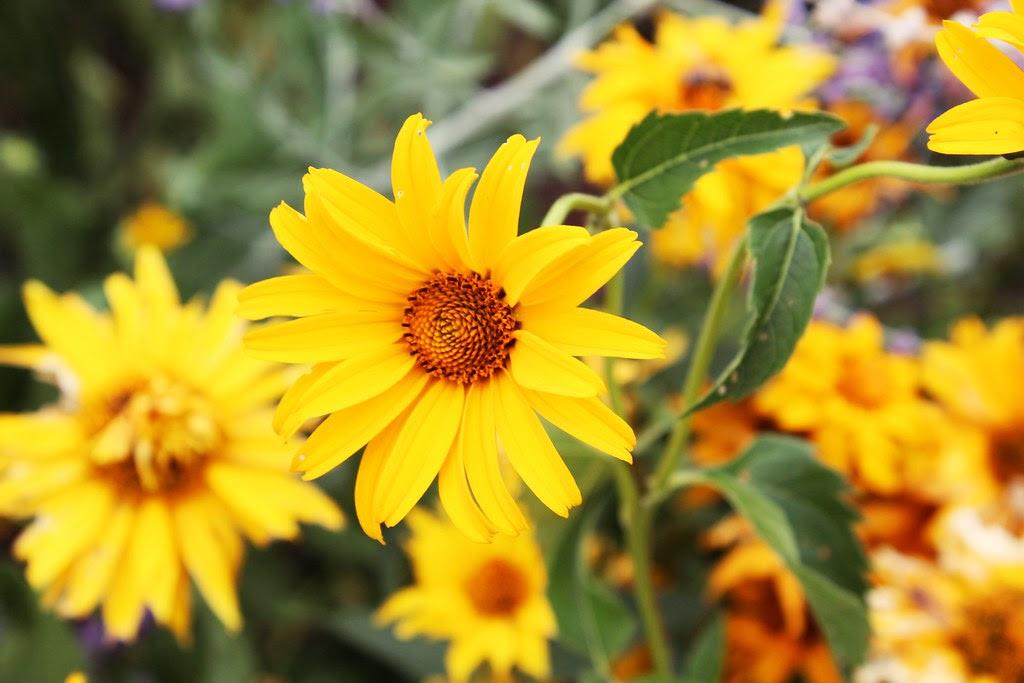 Gelbe Blumen im Bugapark