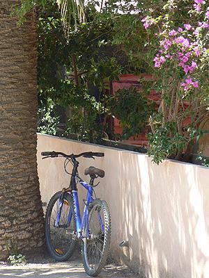 vélo bleu et bougainvillée.jpg