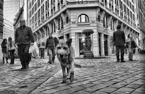 Santiago de Chile, perrito de calle Nueva York by Alejandro Bonilla