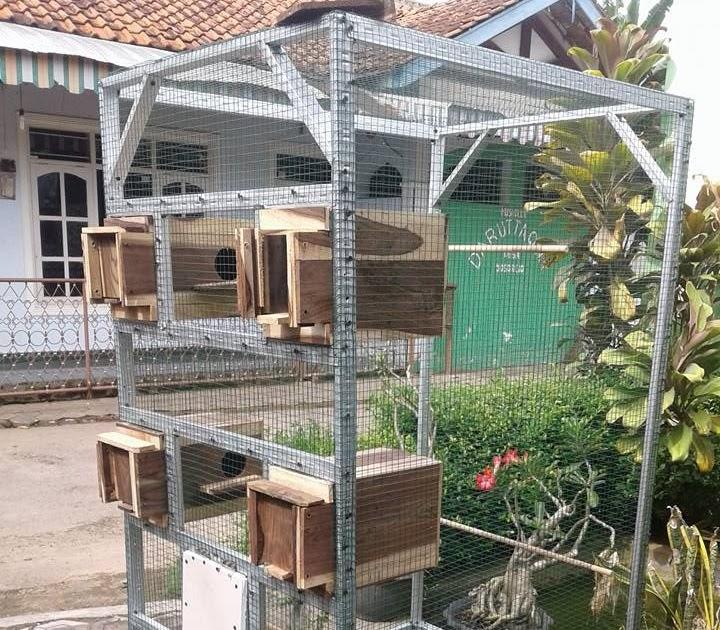 Kandang Burung Koloni Lovebird - Tentang Kolam Kandang Ternak