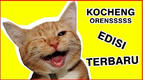 Kucing Lucu Lagi Ketawa
