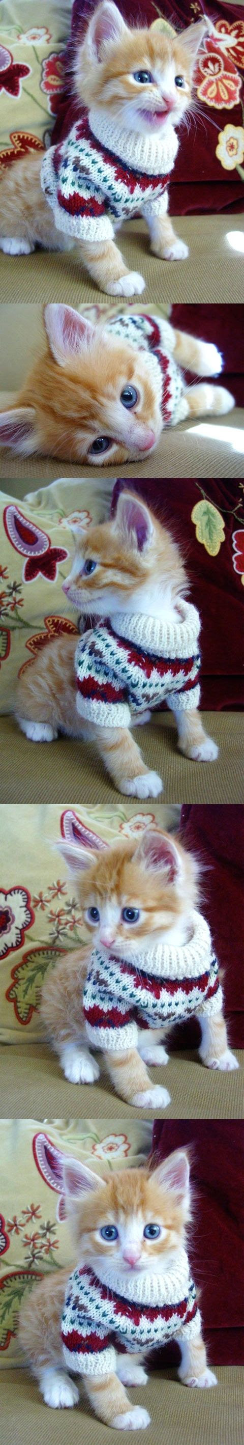 Kitten in a fair isle sweater.