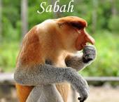 Sommaire Sabah