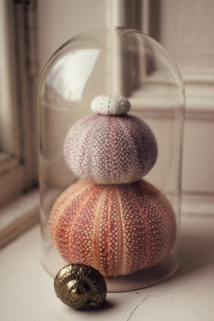 Decorating With Sea Urchins: 27 Cool Ideas - DigsDigs
