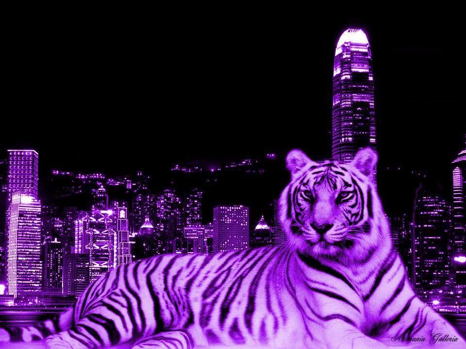 purple tiger | tigers etc | Pinterest