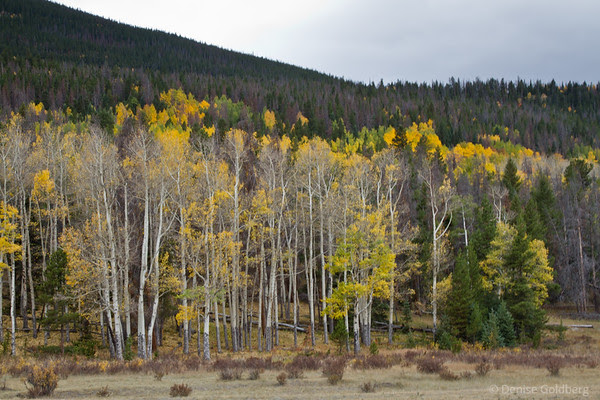 aspens losing leaves, departure date
