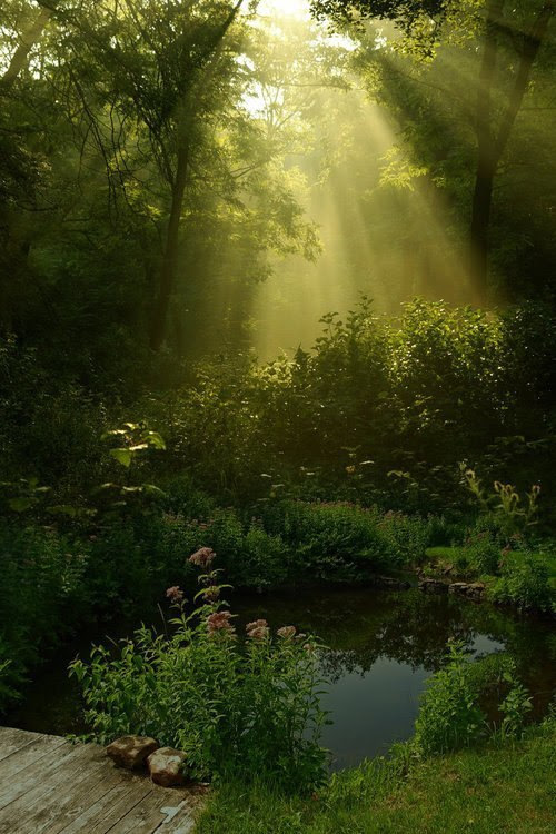 simply-beautiful-world: SUNLIGHT HIGHLIGHTS THIS ONE SPOT. WHY IS THIS SPOT SO SPECIAL? DOES IT HOLD SECRETS OR MAYBE TREASURES? OR IS IT SPECIAL BECAUSE IT IS YOURS ALONE?